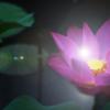 Lum Lotus's Photo