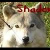 ShadowblackHedgehog's Photo